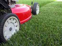 Cutting-your-lawn