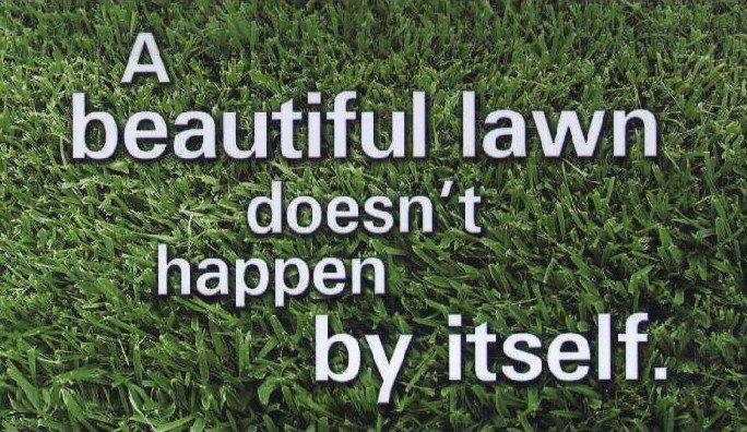 beatiful lawn image