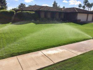 Green lush lawn - 3 weeks!